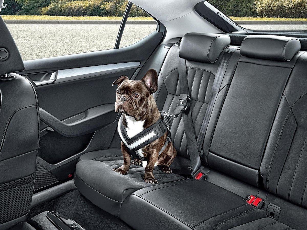 puedo llevar mi perro en el coche